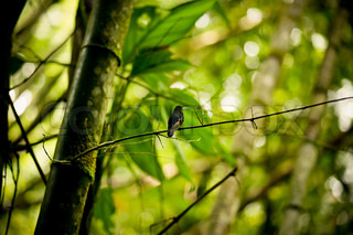 Hummingbird on a branch in the rainforest