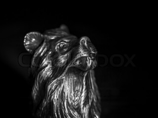 Bronze head of a lion on a black background