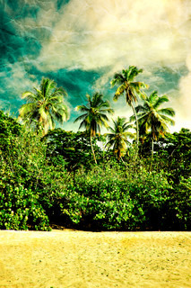 Palm trees with grunge effect