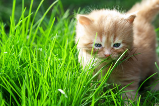 kitten on green grass