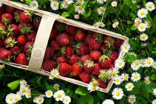 fresh strawberry in basket on green background