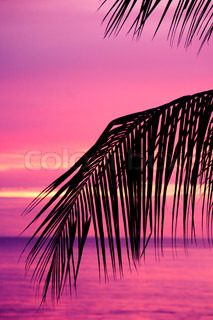 Palm tree silhouette in a pink sunset