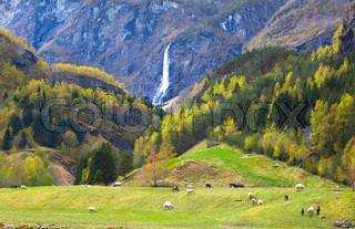 pasture with sheep and beautiful waterfall
