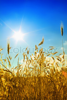 Field with sun