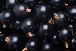 black currant as fine food Textured background