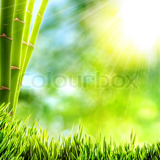 Happy bright day at the bamboo forest, abstract backgrounds