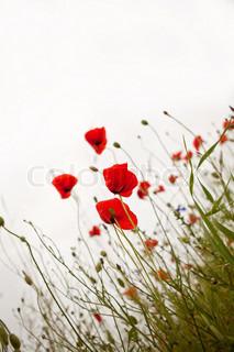 Billede af 'haver, have, naturlandskab'