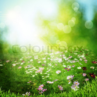Misty meadow on the early morning Abstract natural backgrounds