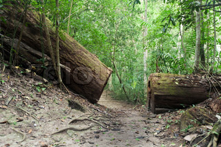 broken tree on the trail in jungle