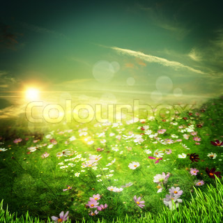 Sunrise on the meadow Natural abstract backgrounds