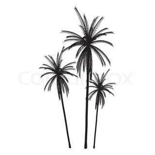 Palms Isolated Silhouette - vector