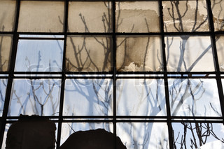 Tree branches and stained factory window Sunlight reflected on broken glass abstract background