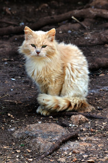 stray cat in the woods