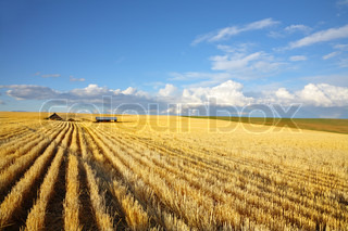 The autumn midday on fields of Montana