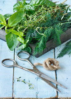 Herbs and scissors