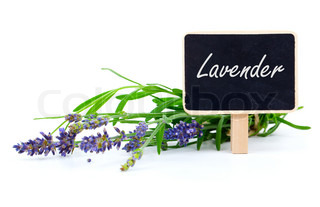 a bunch of lavender flowers with letter plate, on a white background