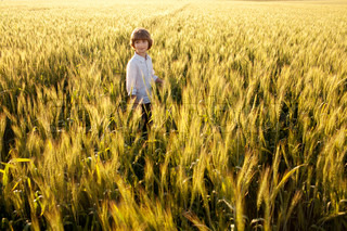 Boy in the middle of wheat fields