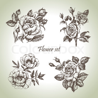Floral set Hand drawn illustrations of roses