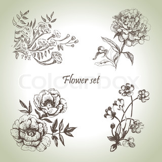 Floral set Hand drawn illustrations