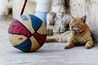 A cat with a basket ball next to it