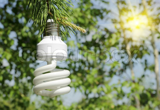 Energy saving light bulb on a branch of pine