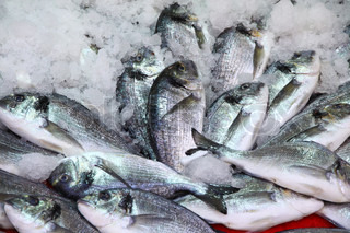 Herring fish in ice on a market stall