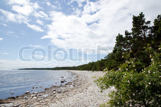Beach with glittering water and blooming roses