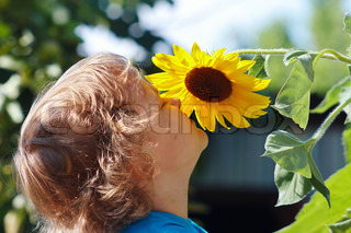 Little cute boy sniffing a sunflower on a sunny day