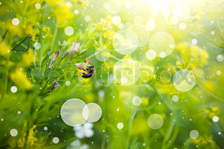 Meadow with wildflowers. Nature abstract background