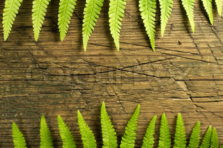 Fresh fern border on vintage wooden background with copy space
