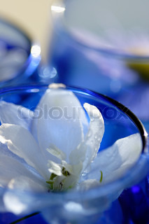 macro of one jasmine flower in small blue glass bowl
