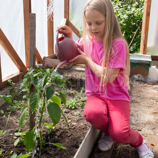 Girl Watering The Tomato Plants