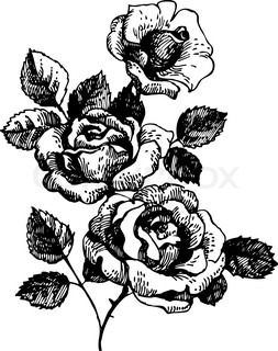 Artistic Elements Black And White also Roses Hand Drawn Illustration Of Bouquet Of Rose Flowers Vector 4494995 furthermore Herb Garden furthermore Contemporary Placemats Ash Blonde Wood Floor Kitchen Contemporary With Herb Garden Bronze Ceiling Tiles Contemporary Christmas Placemats in addition Embroidery. on best herb garden design