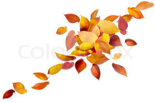 Heap of colorful falling leaves isolated on white