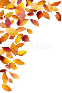 Beautiful falling leaves isolated on white