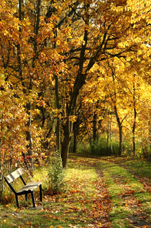 bench in the autumn park as nice natural background