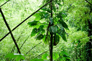 Rainforest with tropical trees and plants