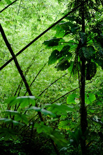 Tropical jungle with green plants