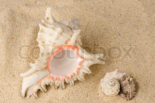 Conchs and shells