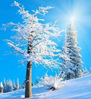 Snowy sunshine mountain landscape