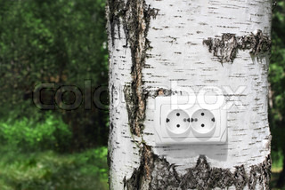 power receptacle on a tree