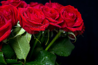 bouquet of red roses on black