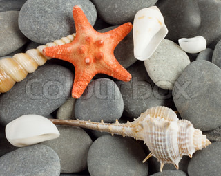 Background to marine mollusks and the star
