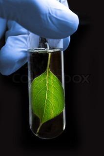 Hand in glove holding test tube with plant