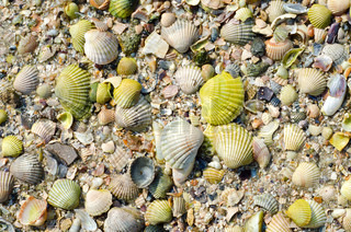 green sea shells with sand as background