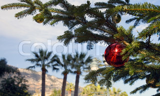 Christmas branch fir tree with palms