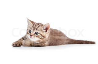 cute cat kitty over white background
