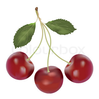 Cluster of cherry berry isolated on white