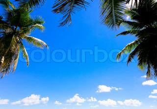 Palms Jungle Leaves