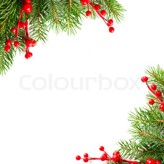 Xmas green tree and red holly berry on white background